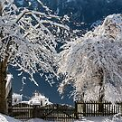 Winter in Beatenberg by GOSIA GRZYBEK