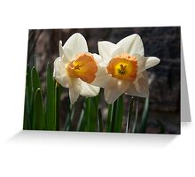 In Conversation - a Couple of Daffodils Huddled Together Greeting Card