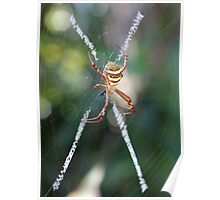 St Andrew's Cross Spider Poster