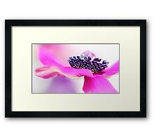 Pretty in Pink.... Framed Print