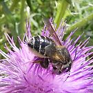 Bee Behind by Martha Medford