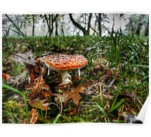 Just Little Old Me ~ Amanita muscaria  ~ Poster