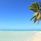Remote Island Paradise - Palm Tree by Honor Kyne