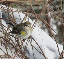 Bird In The Snow by jmburleykneece