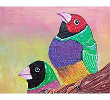 Pretty Gouldian Finches Photographic Print