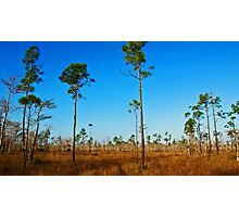 Hiking in Florida  Photographic Print