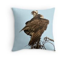 Wings wrapped on cold day Throw Pillow