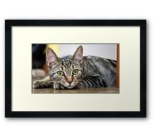 Cat's Eye View Framed Print
