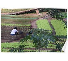 Cultivating vegetables, Luang Prabang, Laos Poster