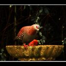 At The Bird Bath by Warren. A. Williams