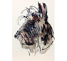 Scottie Dog Photographic Print