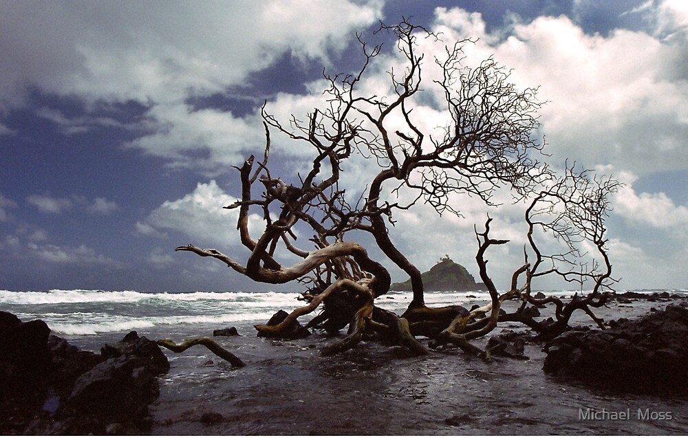 Hana Coast by Michael  Moss
