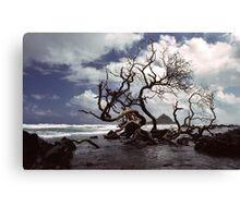 Hana Coast Canvas Print