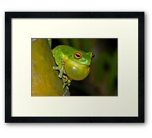 Green Tree Frog Framed Print