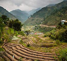 Between Rice Harvests by Paul Weston