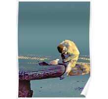 NAUGHTY MONKEY!!! Funny animals Poster