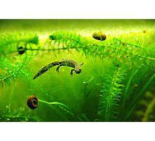 Under water salamander  Photographic Print