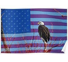 American Bald Eagle 3 Poster