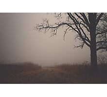 Tree in Fog Photographic Print