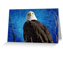 American Bald Eagle Blues Greeting Card