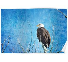 Bald Eagle Blues Poster