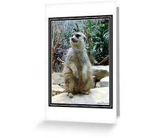 Meerkat Model Greeting Card