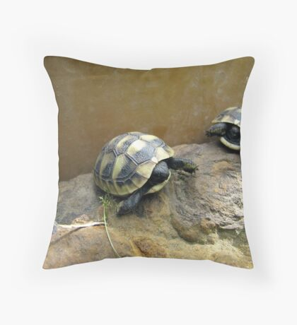 Baby Eastern Hermann's Tortoise  Throw Pillow