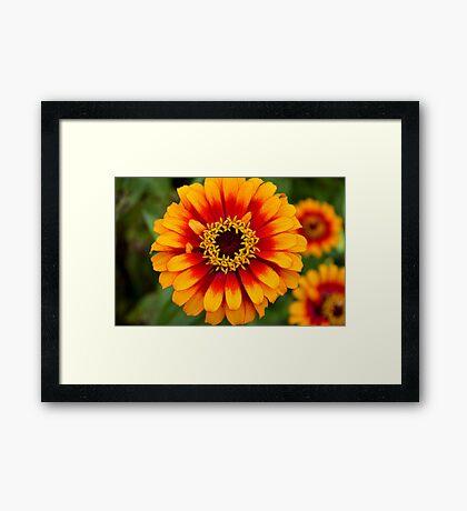 Sun in Bloom Framed Print