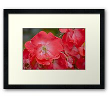 Raindrops on Roses, and Other Red Flowers Framed Print