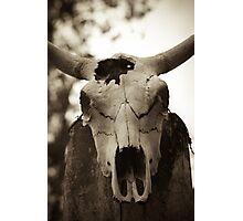 Bull skull Photographic Print