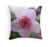 Single Nectarine Blossom Throw Pillow