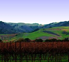 Vineyards and Rolling Hills by Polly Peacock
