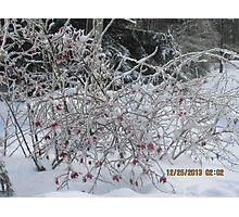 Winter Ice Photographic Print