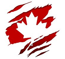 Canada Red Leaf Photographic Print