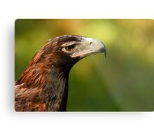 Wedge-Tailed Eagle Metal Print