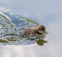 Baby Duck by mjamil81