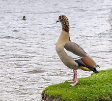 Goose looking at kale by mjamil81