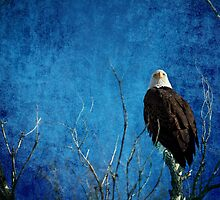 Bald Eagle Blues Into The Night by Bo Insogna