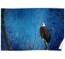 Bald Eagle Blues Into The Night Poster