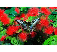 Colored Butterfly Photographic Print