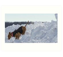 Shelby Comes Off Snow Mountain Art Print