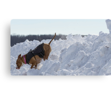 Shelby Comes Off Snow Mountain Canvas Print
