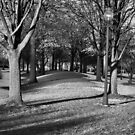 a walk in the park by Matthew Reed