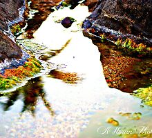 Tidal Pool by Kate0011