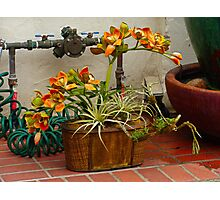 Carmel Orchids in a Corner  Photographic Print