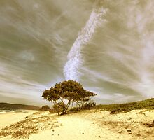 Reach for the sky by john NORRIS
