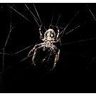 Spider by MoGeoPhoto
