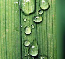 Macro Water Drop Plant by Jack Hickling