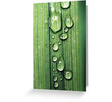 Macro Water Drop Plant Greeting Card
