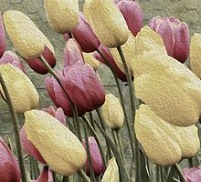 Effectively Tulips by Elaine Teague